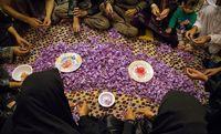 فصل چیدن طلای سرخ در سرزمینهای شرقی +عکس